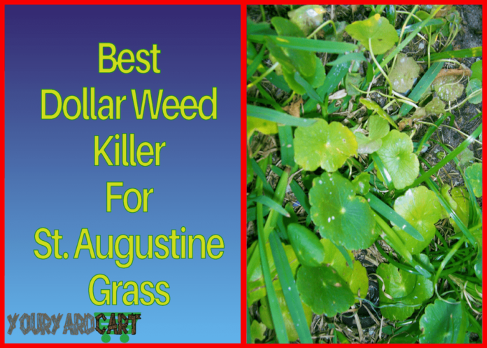 best-dollar-weed-killer-for-st-augustinegrass